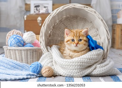 Little striped kitten sitting in a basket with balls of yarn