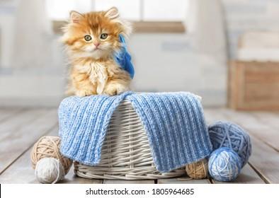 Kleines, gestreiftes Kätzchen, das in einem Korb mit Bälle aus Garnen sitzt