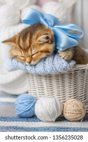 Little striped kitten sleeps in a basket with balls of yarn