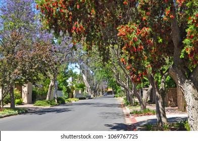 Little suburban street full of green trees. Adelaide, Australia