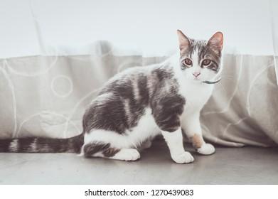 Little tabby cat