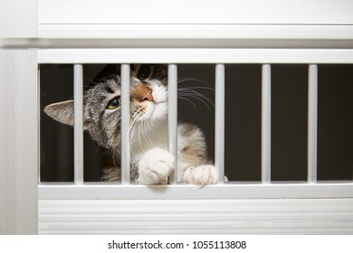 Little tabby cat behind bars sticking its white paws through as though longing for freedom and peering out with one eye
