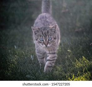 Little Tabby Kitten in the Garden