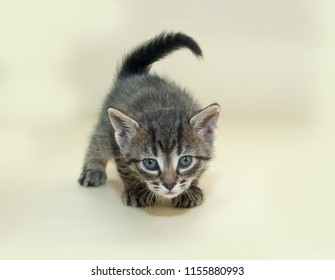 Little tabby kitten plays on yellow background