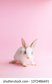 Little tame rabbit on pink background. Care of pets. Copy space. Vertical