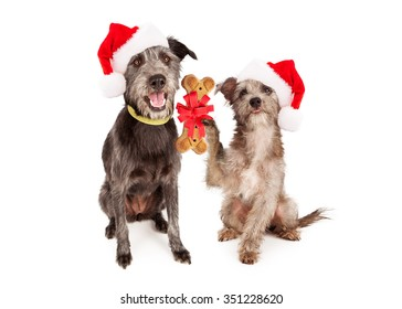 A little terrier dog giving a bone shaped biscuit to a larger dog as a Christmas present.