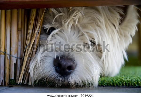Little terrier under bannister