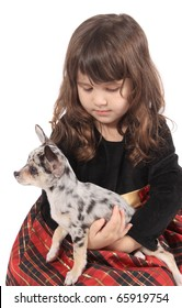Little three year old girl holds her cute little spotted pet chihuahua dog