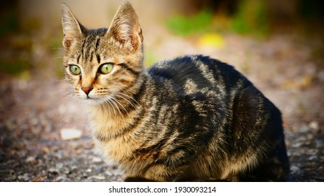 little tigercat with beatiful green eyes