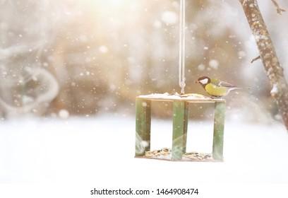 Little titmouse on the trough eats seeds. Winter bird.