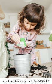 Little toddler girl planting dill herbs in the kitchen at home. Gardening at home