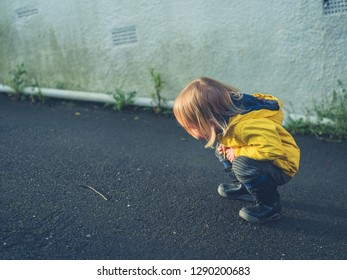 A little toddler is looking at a worm in the street