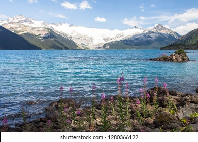 A little touch of fireweed in the foreground of Garibaldi Lake in British Columbia, Canada.