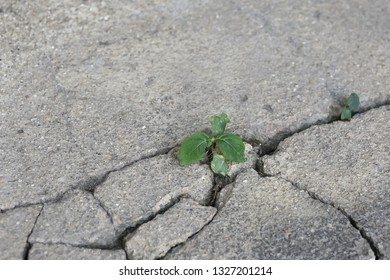Little tree growing from cracked concrete.