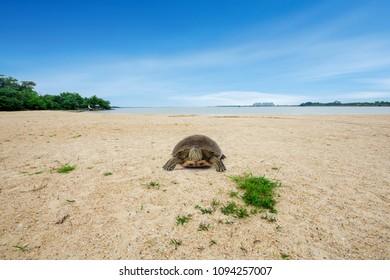 A little turtle on a beach in dalian.