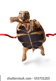 Little turtle runner wins by crossing the finish line