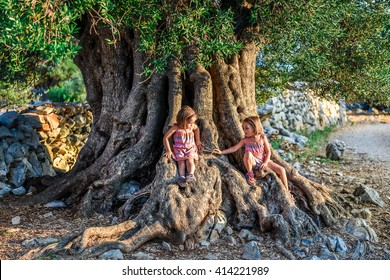 Little Twin Girls are sitting and ancient old olive tree. Children are enjoying big and old ancient olive tree in the olive garden in Mediterranean - Croatia - island Pag.