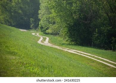 Little Walkaway Lining Forest Border