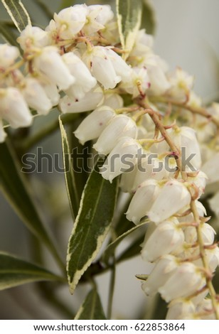 Little White Bell Shaped Flowers Stock Photo Edit Now 622853864