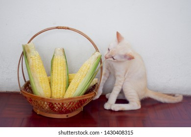 The little white cat sniffed the corn in the basket.