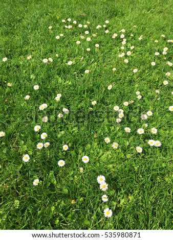 Little White Flower Grass Field Stock Photo Edit Now 535980871