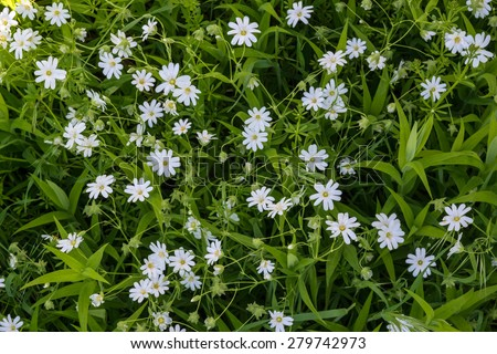 Little White Flowers Between Bright Green Stock Photo Edit Now