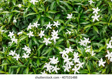 Abstract background tropical bush white small stock photo royalty little white flowers and leaves in nature mightylinksfo Images