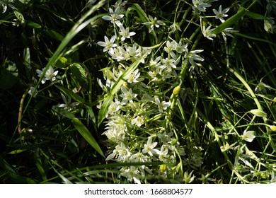 little white flowers with sunlights