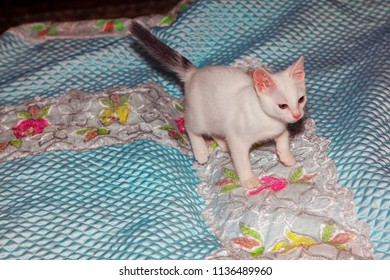 little white kitten standing on the bed