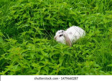 little white rabbit after a thunderstorm