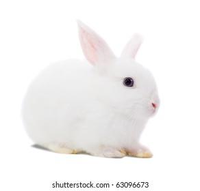 Little white rabbit. Isolated on white background