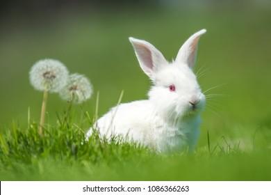 Little white rabbit on green grass in summer day