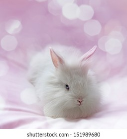 little white rabbit and pink background