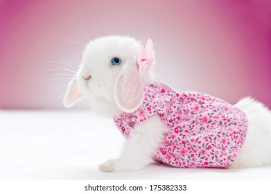 little white rabbit in pink dress and a bow