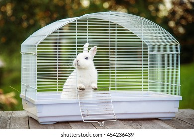 Rabbit Cage Images, Stock Photos & Vectors | Shutterstock on inside small doors, inside church designs, inside office designs, inside garage designs, inside small windows, inside small cottages, inside barn designs, inside small houses with loft, small staircase designs, micro home designs, small home designs, inside shed designs, inside bar designs, small japanese garden designs, small corner fireplace designs, new home designs, unique small kitchen designs, inside fireplace designs, inside mobile home designs, unique home designs,