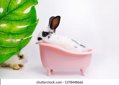 Little white rabbit sitting on pink bathtub on the white background