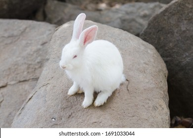 Little white rabbit sitting on the rock ,Lovely bunny