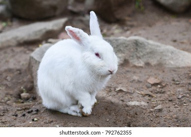 Little white rabbit sitting on the ground.