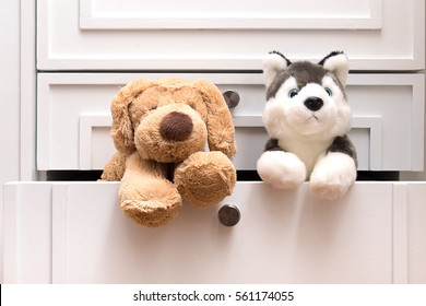 Little wolf gray with blue eyes Siberian Husky puppy fur doll lean out his head after hiding in drawer of wardrobe cabinet in bedroom.