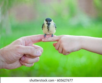 little yellow and black bird on finger, tit in the hand, tenderness, greenery blured spring summer background, transfer experience from parents to children, game pleasure conversation chatter twitter