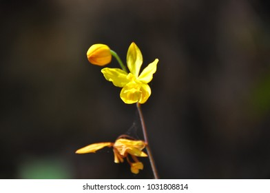Little Yellow Flower in the forest