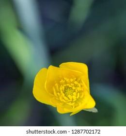 little yellow flower in green grass