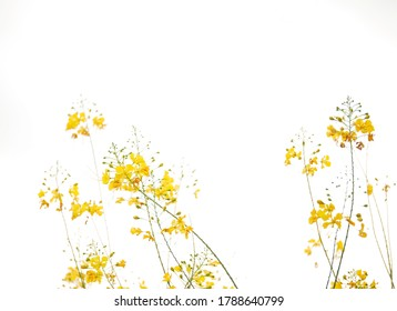little yellow flowers blooming on sky background.