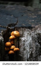 Little yellow, orange mushrooms on a black gray tree