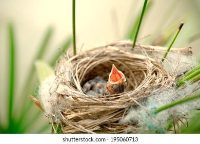 Little young birds in a bird nest