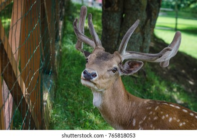 little young  deer at the fence