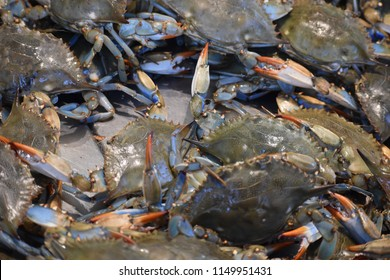 live Chesapeake Bay blue crabs at a fish market in Washington, DC