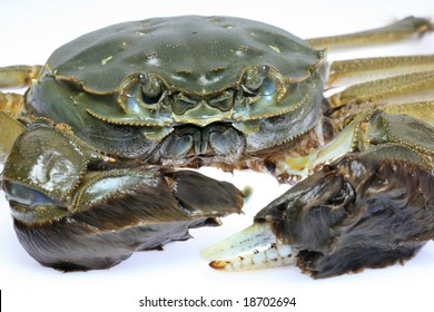 Live Chinese Mitten Crab Isolation on White Background