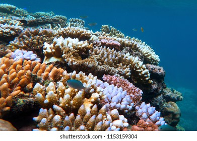 Live Coral reef and tropical fish swimming underwater at the Great Barrier Reef  Queensland,  Australia.