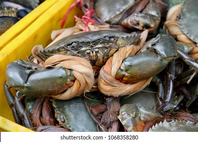 Live crabs tied up for sale in a seafood market in Vietnam.